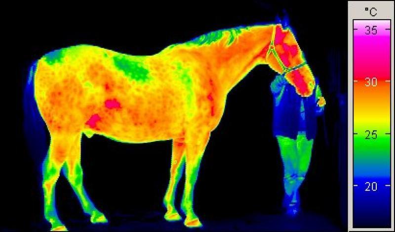 Krankheiten mit der Thermografie-Kamera erkennen
